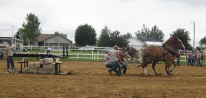 2011 horse pull