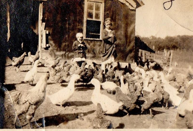 feeding fowl (800x544)