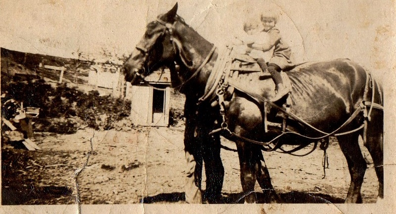 joyce muriel on draft horse 1920 (800x432)