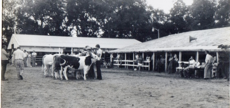 cattle show (800x375)
